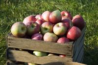 Celebrate National Nutrition Month® with Michigan Apples