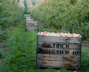 History of Michigan Apples